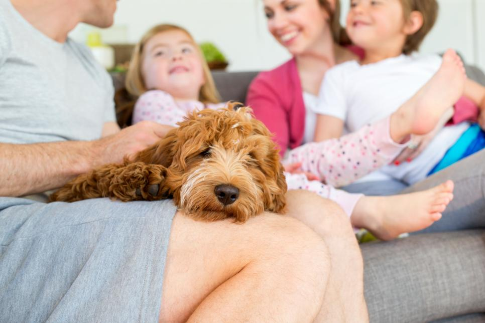 Do dogs perceive children differently than adults