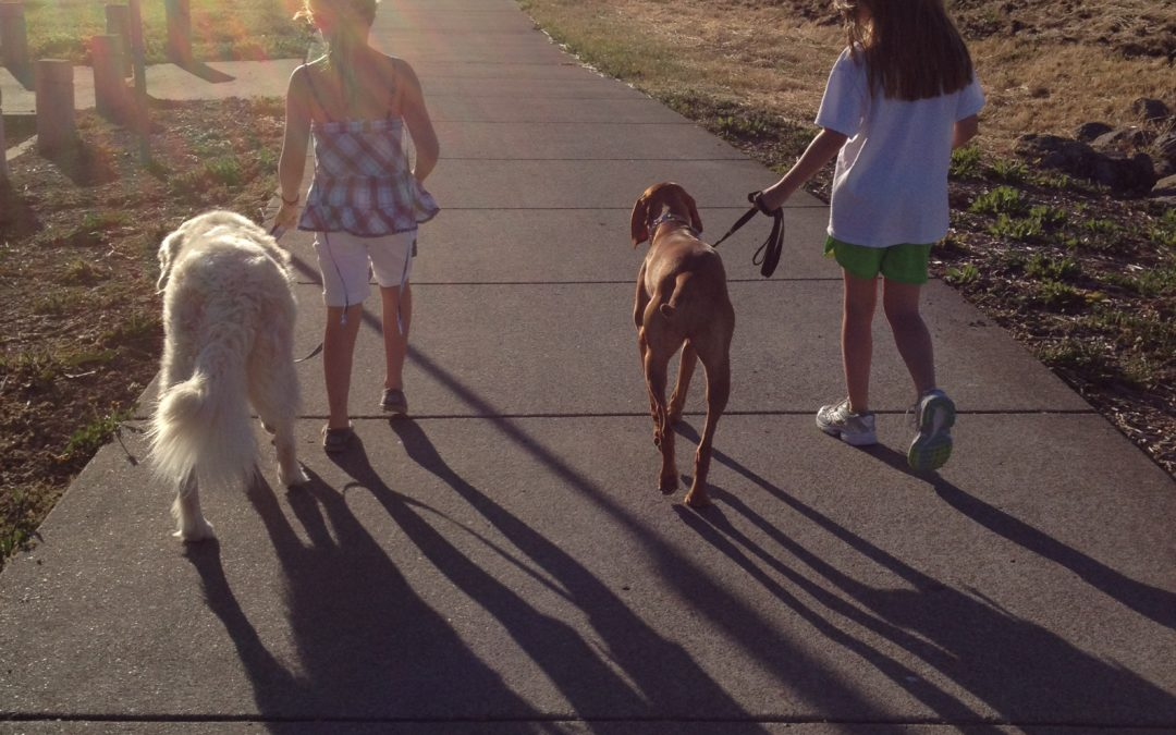 Kids Walking the Dog … Dream or  Nightmare?