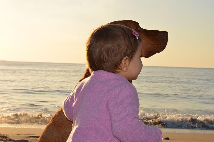 Babies and Dogs – Creating a Safe and Harmonious Relationship