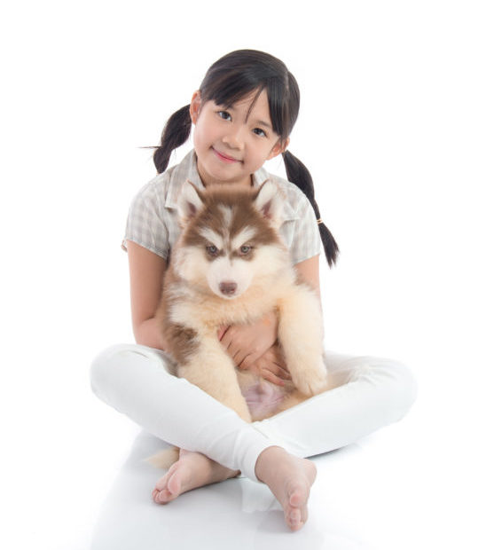 Beautiful asian girl hugging siberian husky puppy on white background isolated with copy space on right