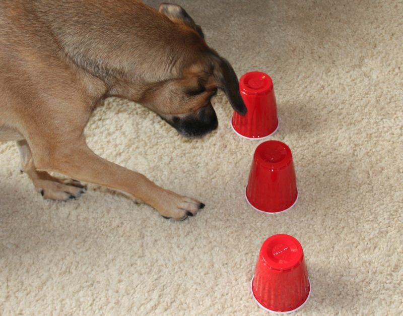 sniffer dog games to play with your child and your family dog