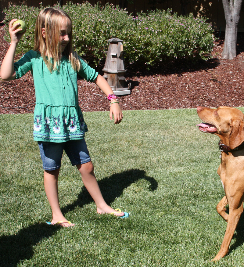 Teaching your dog to fetch in 8 easy steps