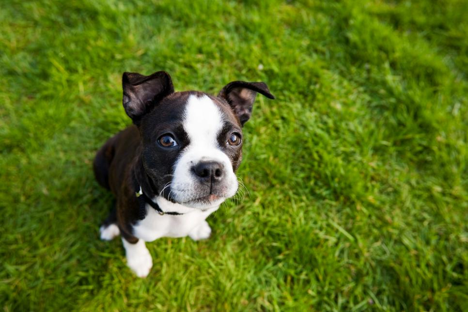 puppy training, puppy training tips