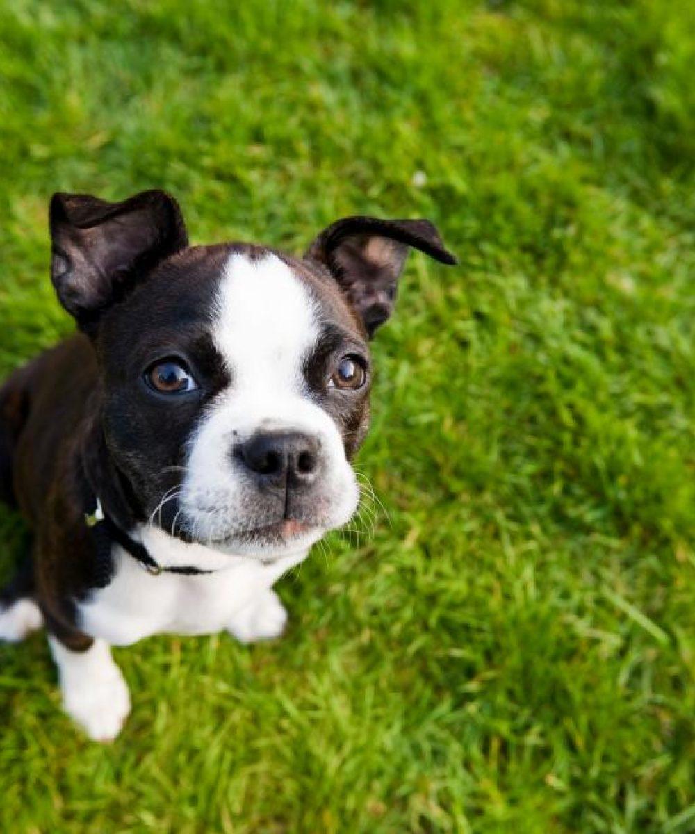 puppy training, puppy training tips