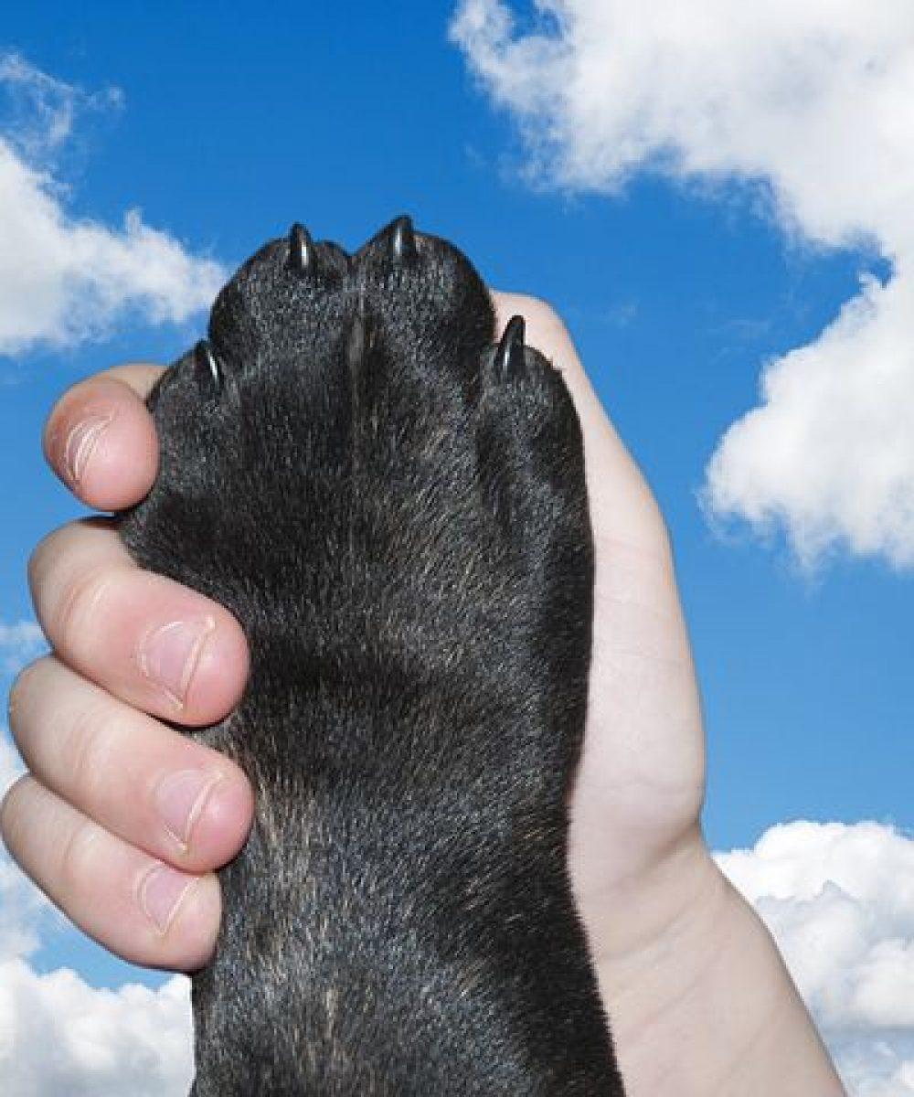dog-2383071__480