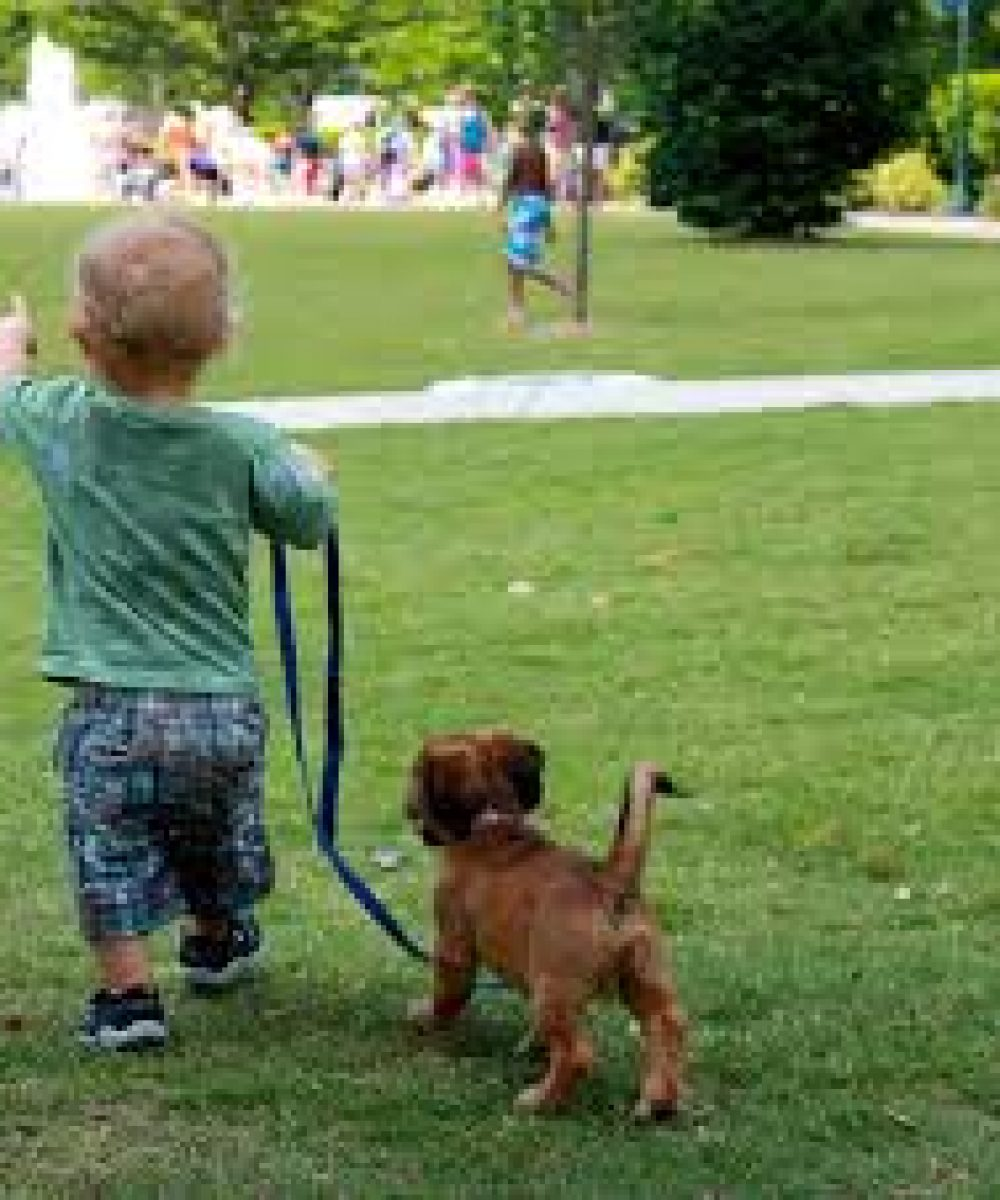 images baby walking puppy