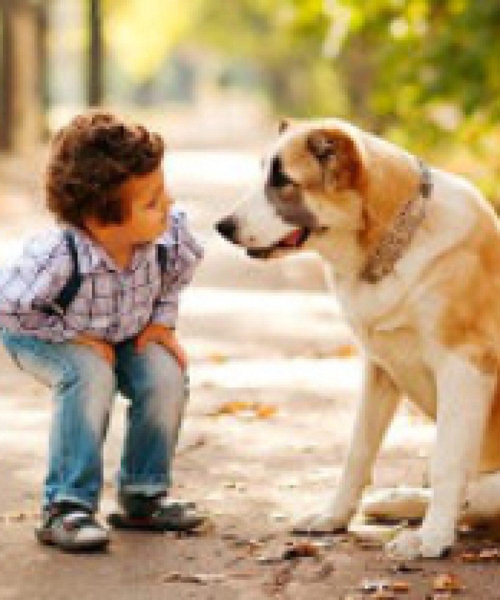kid-looking-at-dog